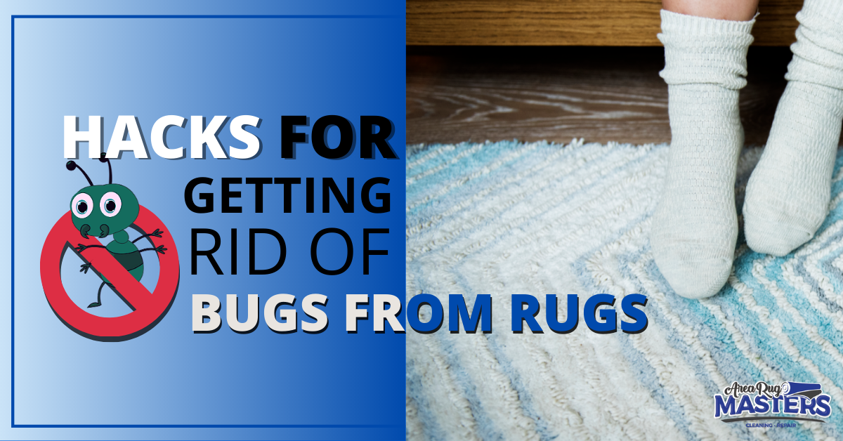 how to get rid of rug bugs