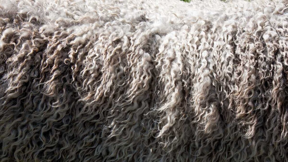 how to professionally clean a wool rug
